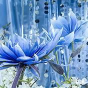 哈尔滨婚礼策划方案:阿布扎比蓝