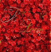 济南婚礼策划方案:红玫瑰